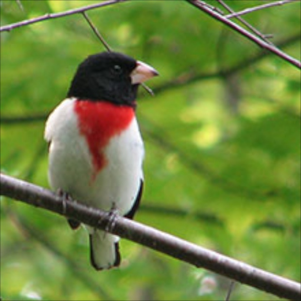 Birding on the West River with the Vermont LandTrust