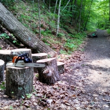 West River Trail, tree clearing