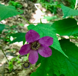 WRT trail wildflower