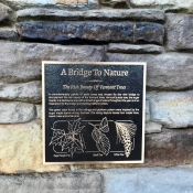 WRT bridge to nature - 4