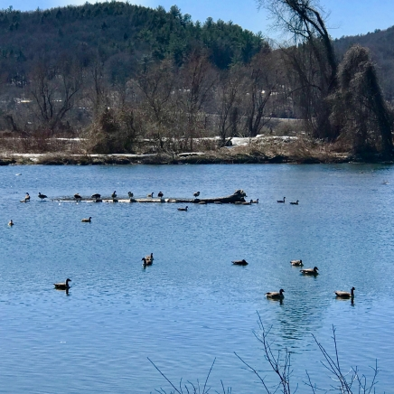 WRT Early Spring March 2018 - 1